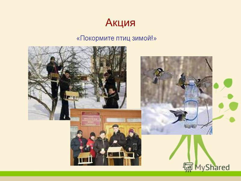 Акция «Покормите птиц зимой!»
