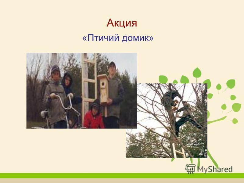 Акция «Птичий домик»