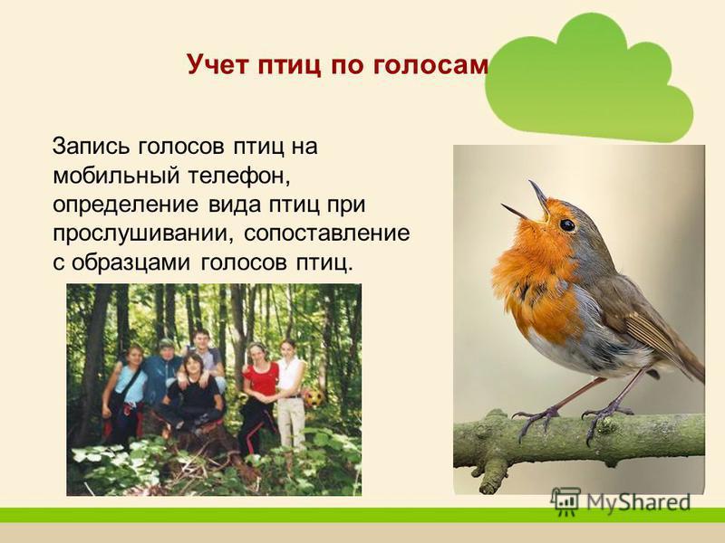 Учет птиц по голосам Запись голосов птиц на мобильный телефон, определение вида птиц при прослушивании, сопоставление с образцами голосов птиц.