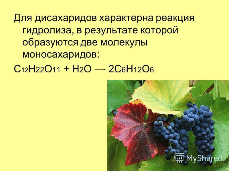 Для дисахаридов характерна реакция гидролиза, в результате которой образуются две молекулы моносахаридов: C 12 H 22 O 11 + H 2 O 2C 6 H 12 O 6