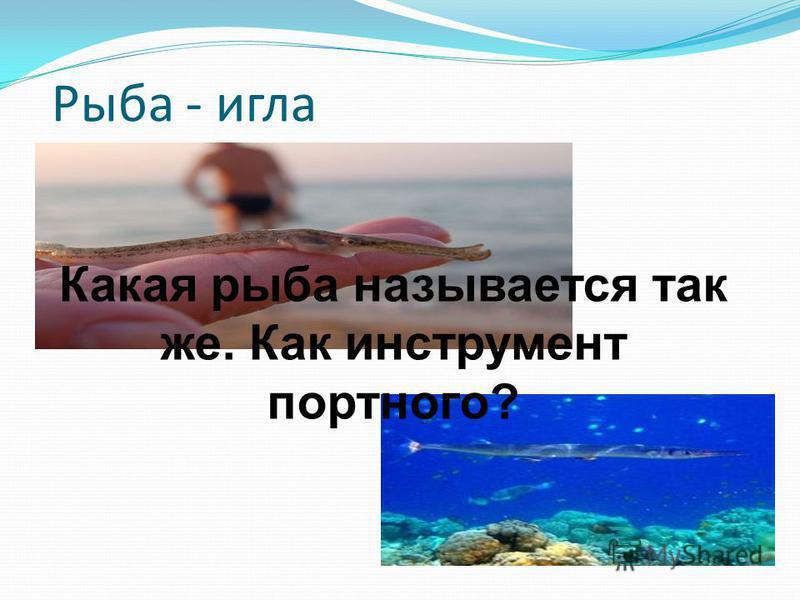 Рыба - игла Какая рыба называется так же. Как инструмент портного?