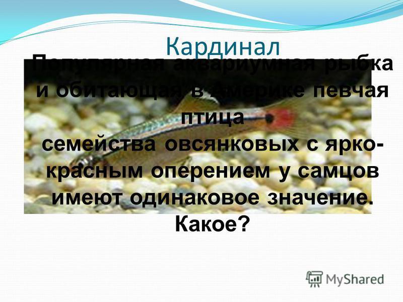 Кардинал Популярная аквариумная рыбка и обитающая в Америке певчая птица семейства овсянковых с ярко- красным оперением у самцов имеют одинаковое значение. Какое?