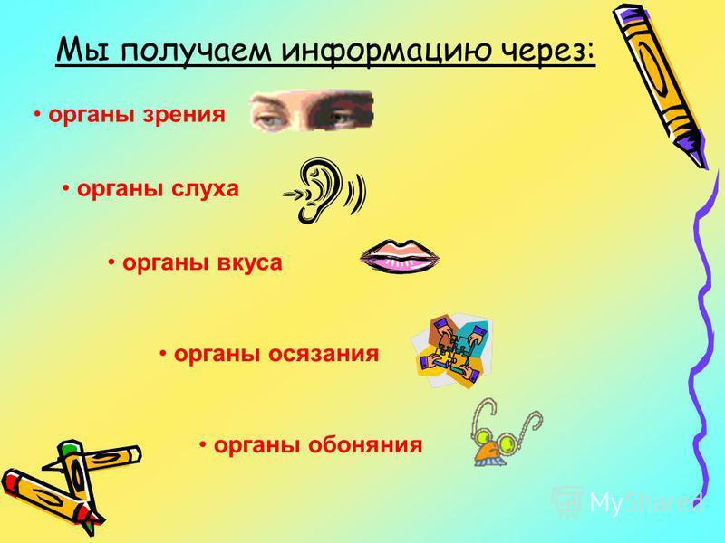 Мы получаем информацию через: органы зрения органы слуха органы вкуса органы осязания органы обоняния