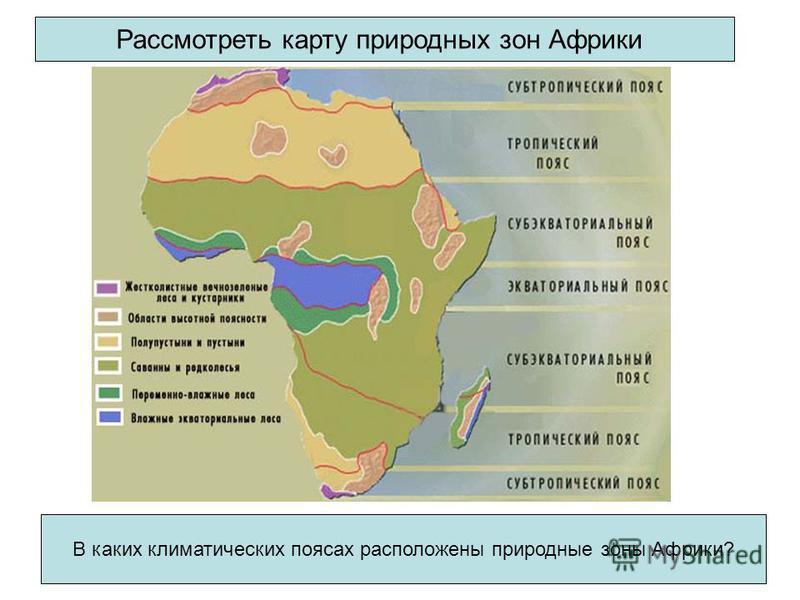 Рассмотреть карту природных зон Африки В каких климатических поясах расположены природные зоны Африки?