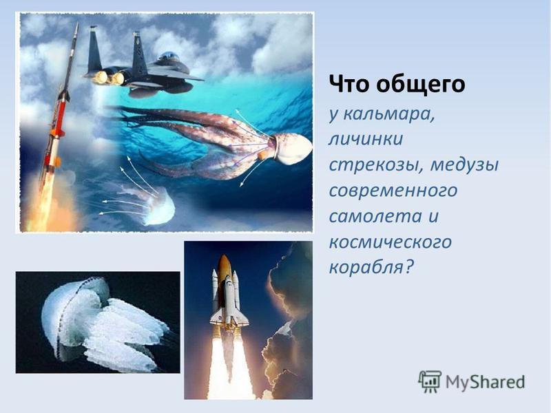 Что общего у кальмара, личинки стрекозы, медузы современного самолета и космического корабля?