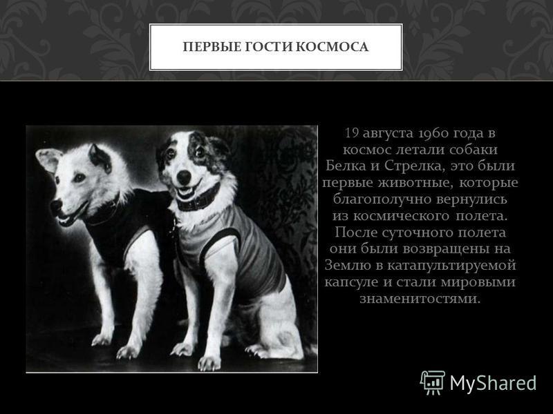 19 августа 1960 года в космос летали собаки Белка и Стрелка, это были первые животные, которые благополучно вернулись из космического полета. После суточного полета они были возвращены на Землю в катапультируемой капсуле и стали мировыми знаменитостя