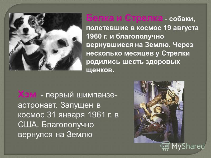 Белка и Стрелка - собаки, полетевшие в космос 19 августа 1960 г. и благополучно вернувшиеся на Землю. Через несколько месяцев у Стрелки родились шесть здоровых щенков. Хэм - первый шимпанзе- астронавт. Запущен в космос 31 января 1961 г. в США. Благоп