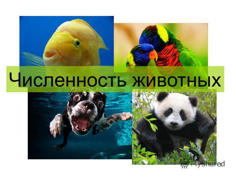 1 Численность животных
