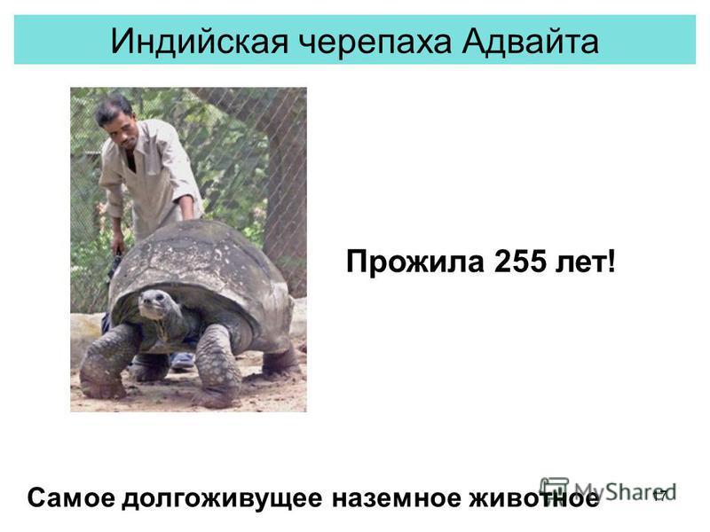 17 Индийская черепаха Адвайта Прожила 255 лет! Самое долгоживущее наземное животное