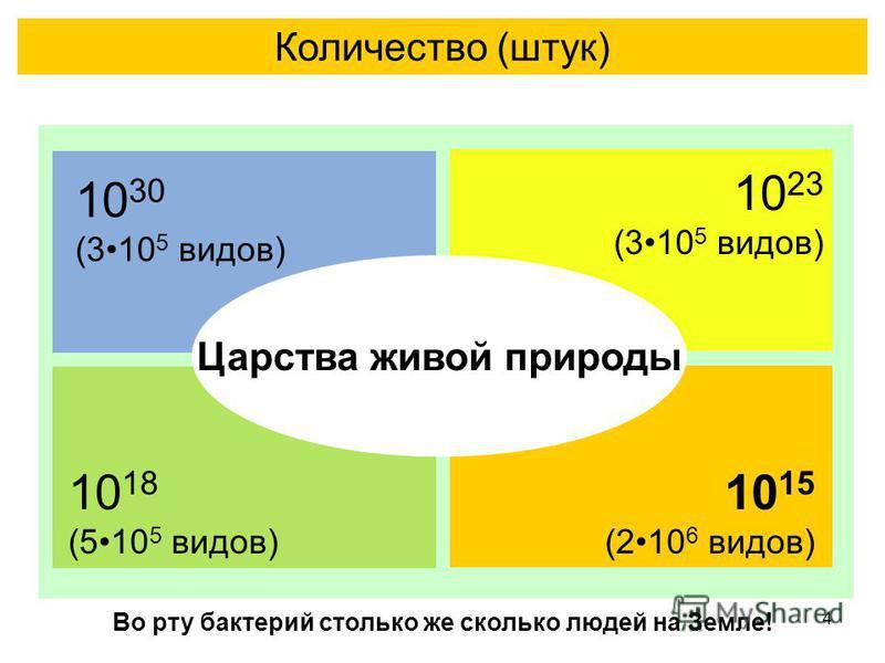 4 Количество (штук) Царства живой природы 10 30 (310 5 видов) 10 15 (210 6 видов) Во рту бактерий столько же сколько людей на Земле! 10 23 (310 5 видов) 10 18 (510 5 видов)