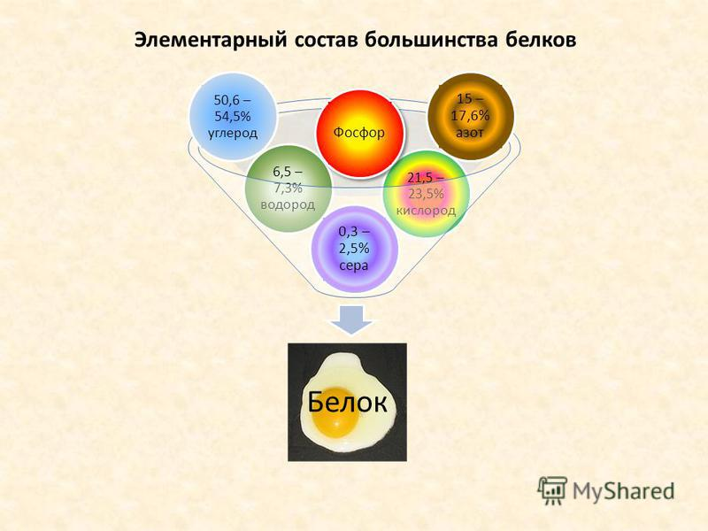Элементарный состав большинства белков Белок 21,5 – 23,5% кислород 6,5 – 7,3% водород 0,3 – 2,5% сера 15 – 17,6% азот 50,6 – 54,5% углерод