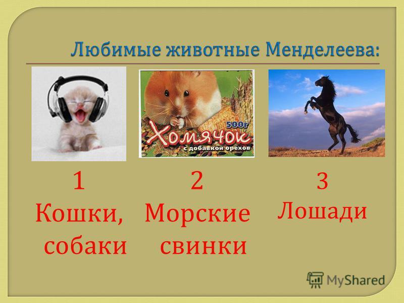 1 Кошки, собаки 2 Морские свинки 3 Лошади