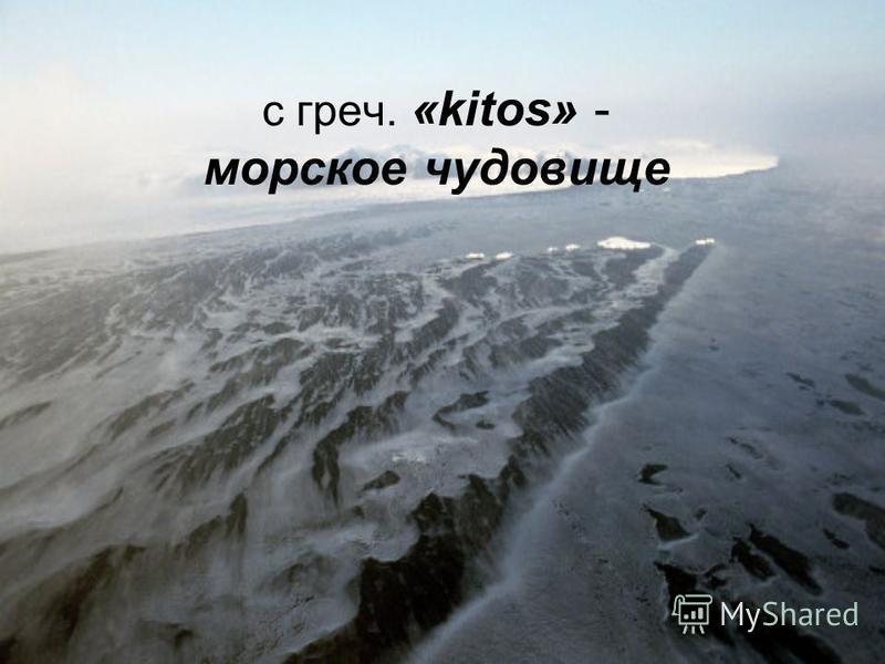 с греч. «kitos» - морское чудовище