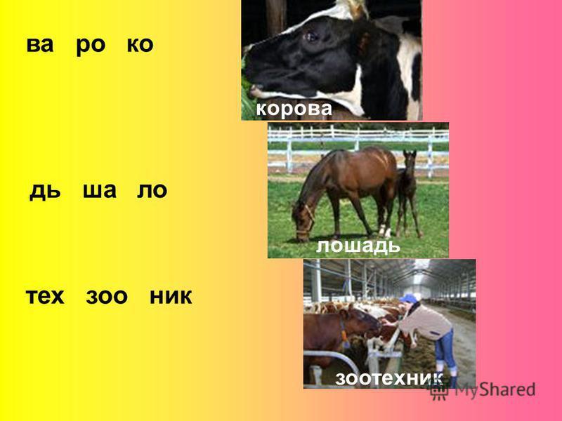 ва ро код ша ла тех сонник корова лашадь зоотехник