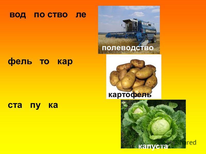вод по стволе филь то кар ста пу ка полеводство картофиль капуста