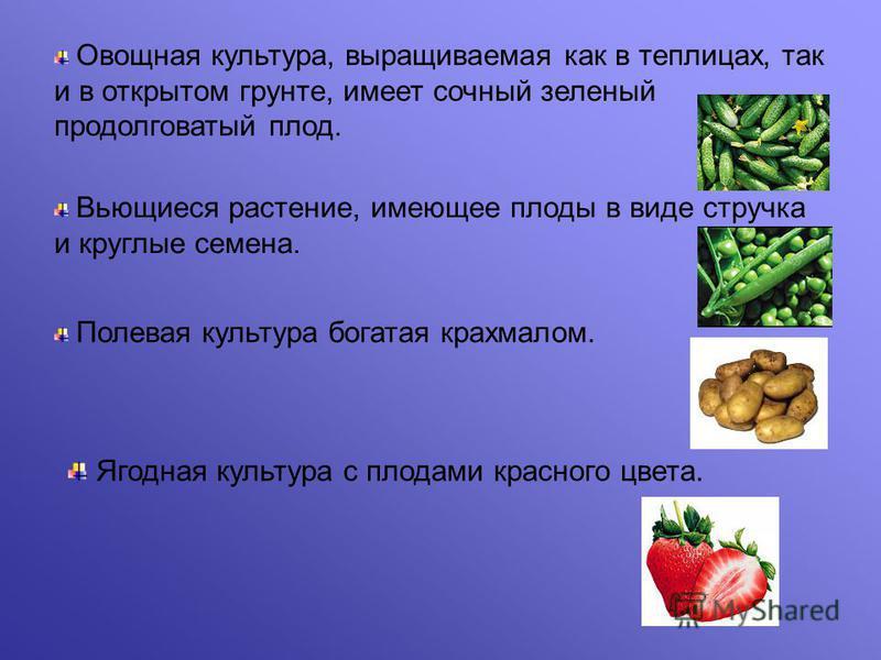 Овощная культура, выращиваемая как в теплисах, так и в открытом грунте, имеет сочный зеленый продолговатый плад. Вьющиеся растение, имеющее плады в виде стручка и круглые семена. Полевая культура богатая крахмалам. Ягодная культура с пладами красного