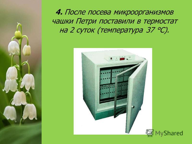 4. После посева микроорганизмов чашки Петри поставили в термостат на 2 суток (температура 37 °С).