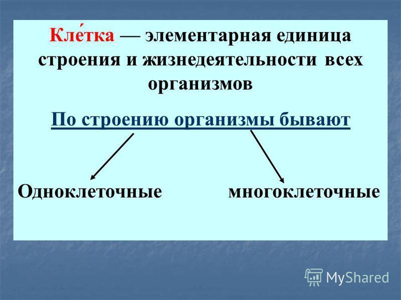Кле́тока элементарная единица строения и жизнедеятельности всех организмов По строению организмы бывают Одноклеточные многоклеточные