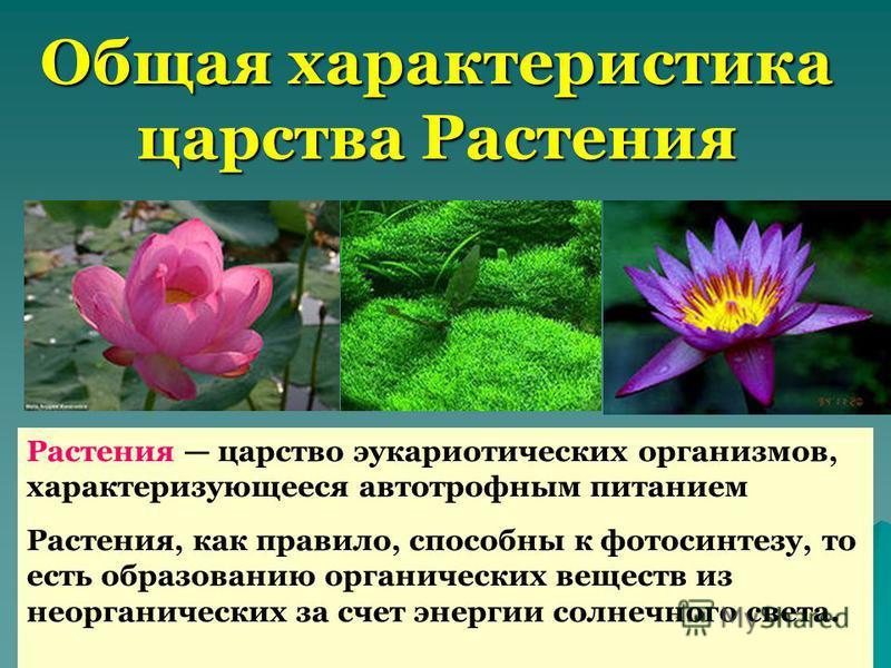 Общая характеристика царства Растения Растения царство эукариотических организмов, характеризующееся автотрофным питанием Растения, как правило, способны к фотосинтезу, то есть образованию органических веществ из неорганических за счет энергии солнеч