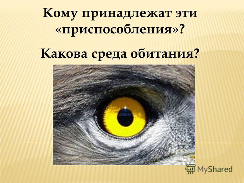 Кому принадлежат эти «приспособления»? Какова среда обитания?