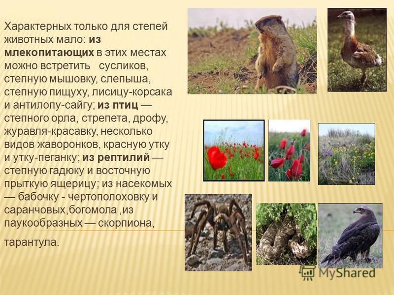 Характерных только для степей животных мало: из млекопитающих в этих местах можно встретить сусликов, степную мышовку, слепыша, степную пищуху, лисицу-корсака и антилопу-сайгу; из птиц степного орла, стрепета, дрофу, журавля-красавку, несколько видов