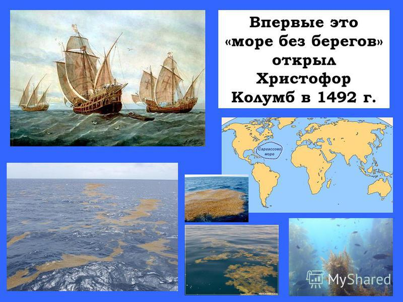 Впервые это «море без берегов» открыл Христофор Колумб в 1492 г.