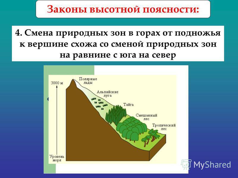 Законы высотной поясности: 4. Смена природных зон в горах от подножья к вершине схожа со сменой природных зон на равнине с юга на север