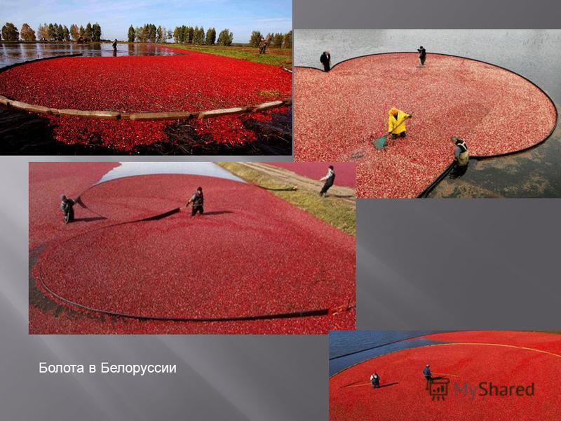 Болота в Белоруссии