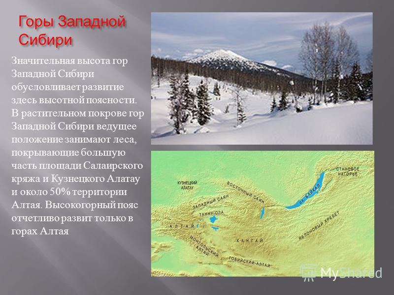 Горы Западной Сибири Значительная высота гор Западной Сибири обусловливает развитие здесь высотной поясности. В растительном покрове гор Западной Сибири ведущее положение занимают леса, покрывающие большую часть площади Салаирского кряжа и Кузнецкого