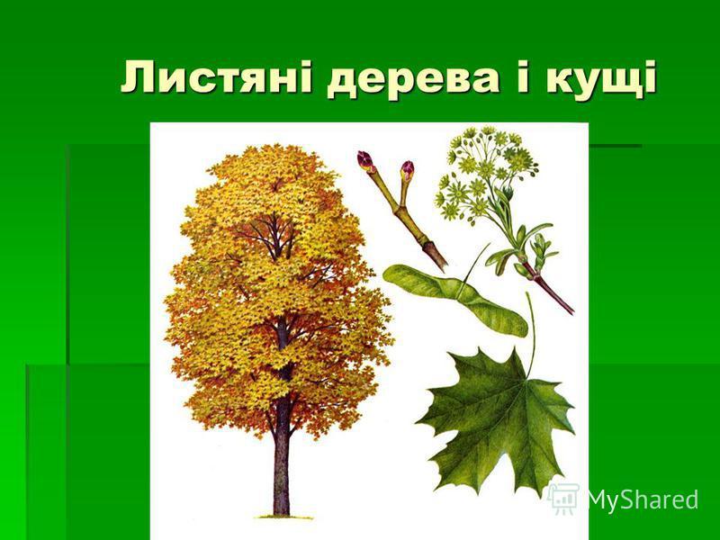 Листяні дерева і кущі
