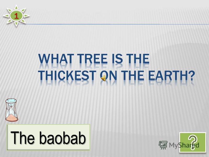 11 The baobab