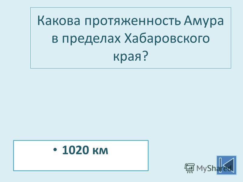Какова протяженность Амура в пределах Хабаровского края? 1020 км