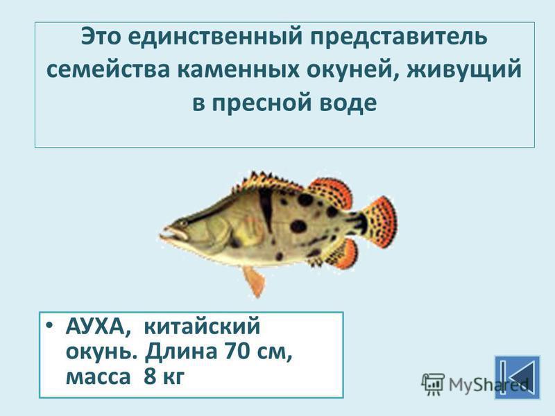 Это единственный представитель семейства каменных окуней, живущий в пресной воде АУХА, китайский окунь. Длина 70 см, масса 8 кг