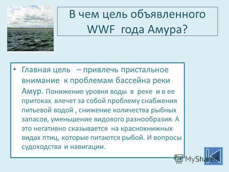 В чем цель объявленного WWF года Амура? Главная цель – привлечь пристальное внимание к проблемам бассейна реки Амур. Понижение уровня воды в реке и в ее притоках влечет за собой проблему снабжения питьевой водой, снижение количества рыбных запасов, у