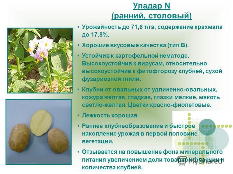 Уладар N (ранний, столовый) Урожайность до 71,6 т/га, содержание крахмала до 17,8%. Хорошие вкусовые качества (тип В). Устойчив к картофельной нематоде. Высокоустойчив к вирусам, относительно высокоустойчив к фитофторозу клубней, сухой фузариозной гн