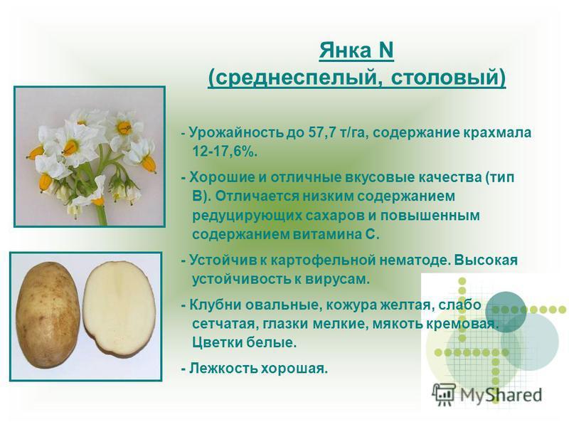 Янка N (среднеспелый, столовый) - Урожайность до 57,7 т/га, содержание крахмала 12-17,6%. - Хорошие и отличные вкусовые качества (тип В). Отличается низким содержанием редуцирующих сахаров и повышенным содержанием витамина С. - Устойчив к картофельно