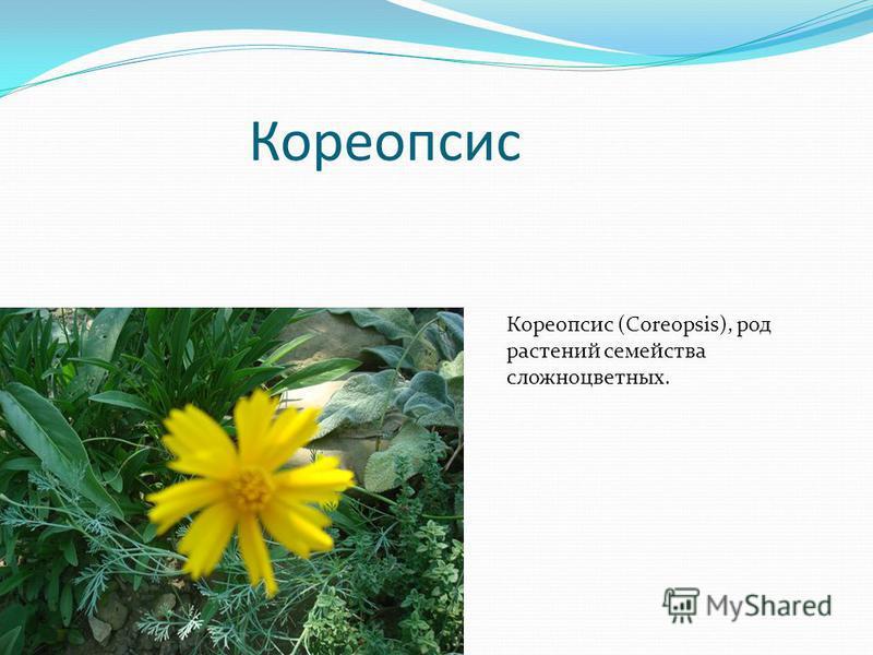 Кореопсис Кореопсис (Coreopsis), род растений семейства сложноцветных.