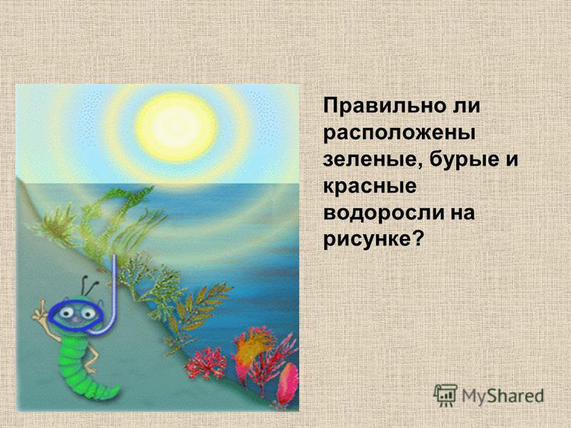 Правильно ли расположены зеленые, бурые и красные водоросли на рисунке?
