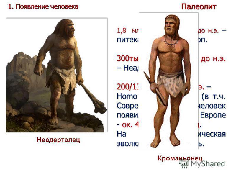 1,8 млн. – 300 тыс. лет до н.э. – питекантроп, синантроп. 300 тыс. – 40 тыс. лет до н.э. – Неадертальцы. 200/130 тыс. лет до н.э. – Homo sapiens sapiens (в т.ч. Современный человек появился в Африке. В Европе - ок. 40 тыс. лет назад. На нем биологиче