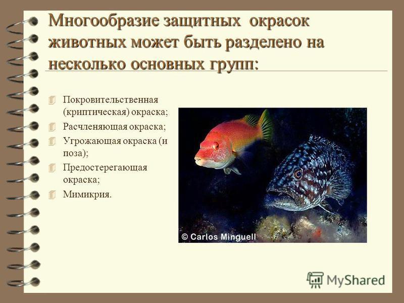 Многообразие защитных окрасок животных может быть разделено на несколько основных групп: 4 Покровительственная (криптическая) окраска; 4 Расчленяющая окраска; 4 Угрожающая окраска (и поза); 4 Предостерегающая окраска; 4 Мимикрия.
