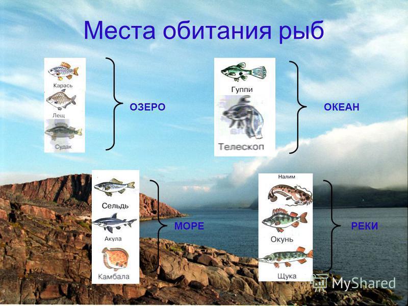 Места обитания рыб ОЗЕРООКЕАН МОРЕРЕКИ