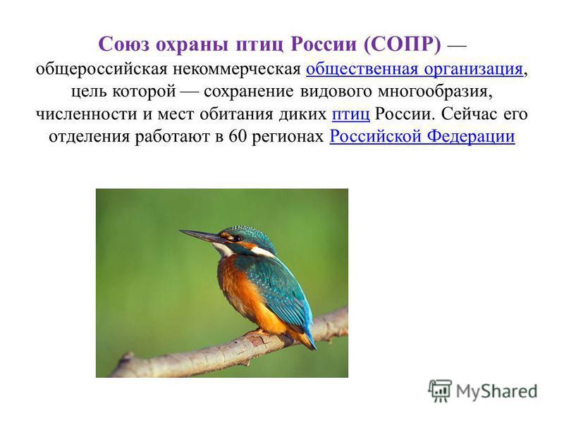 Союз охраны птиц России (СОПР) общероссийская некоммерческая общественная организация, цель которой сохранение видового многообразия, численности и мест обитания диких птиц России. Сейчас его отделения работают в 60 регионах Российской Федерацииобщес