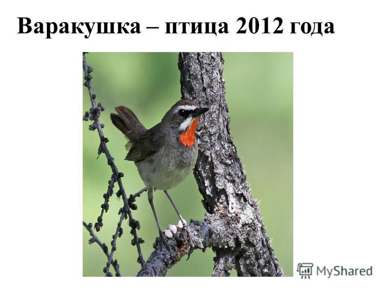 Варакушка – птица 2012 года