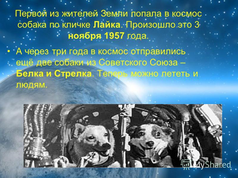 Первой из жителей Земли попала в космос собака по кличке Лайка. Произошло это 3 ноября 1957 года. А через три года в космос отправились ещё две собаки из Советского Союза – Белка и Стрелка. Теперь можно лететь и людям.