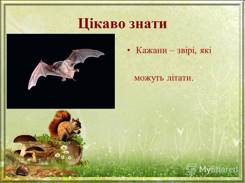 Цікаво знати Кажани – звірі, які можуть літати.
