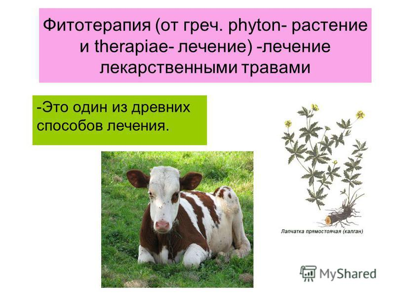 Фитотерапия (от греч. phyton- растение и therapiae- лечение) -лечение лекарственными травами -Это один из древних способов лечения.