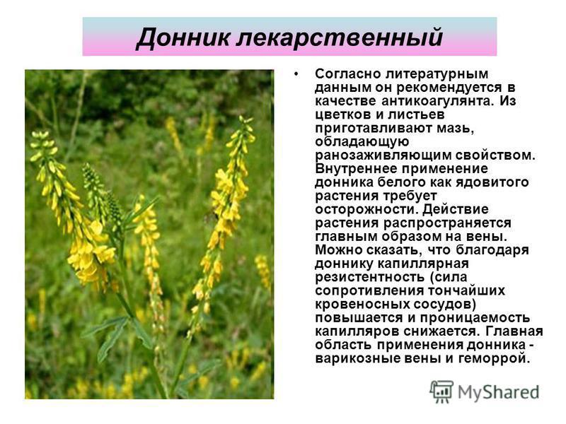 Донник лекарственный Согласно литературным данным он рекомендуется в качестве антикоагулянта. Из цветков и листьев приготавливают мазь, обладающую ранозаживляющим свойством. Внутреннее применение донника белого как ядовитого растения требует осторожн
