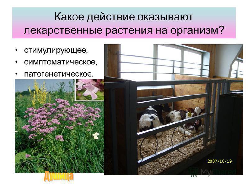 Какое действие оказывают лекарственные растения на организм? стимулирующее, симптоматическое, патогенетическое.