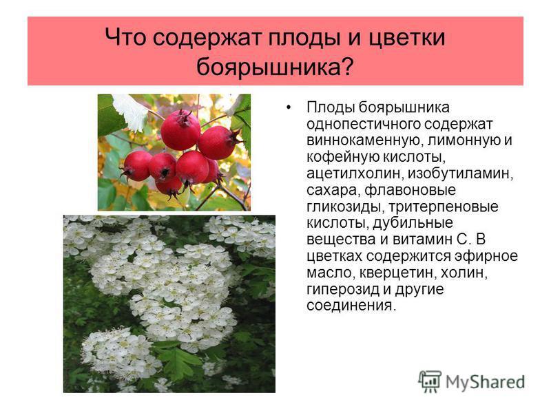 Что содержат плоды и цветки боярышника? Плоды боярышника однопестичного содержат виннокаменную, лимонную и кофейную кислоты, ацетилхолин, изобутиламин, сахара, флавоновые гликозиды, тритерпеновые кислоты, дубильные вещества и витамин С. В цветках сод