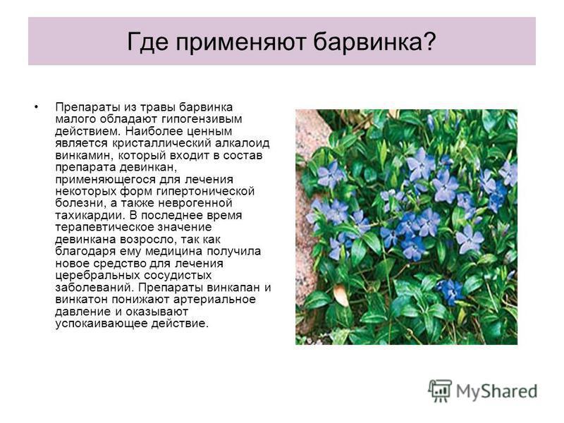 Где применяют барвинка? Препараты из травы барвинка малого обладают гипогензивым действием. Наиболее ценным является кристаллический алкалоид винкамин, который входит в состав препарата девинкан, применяющегося для лечения некоторых форм гипертоничес